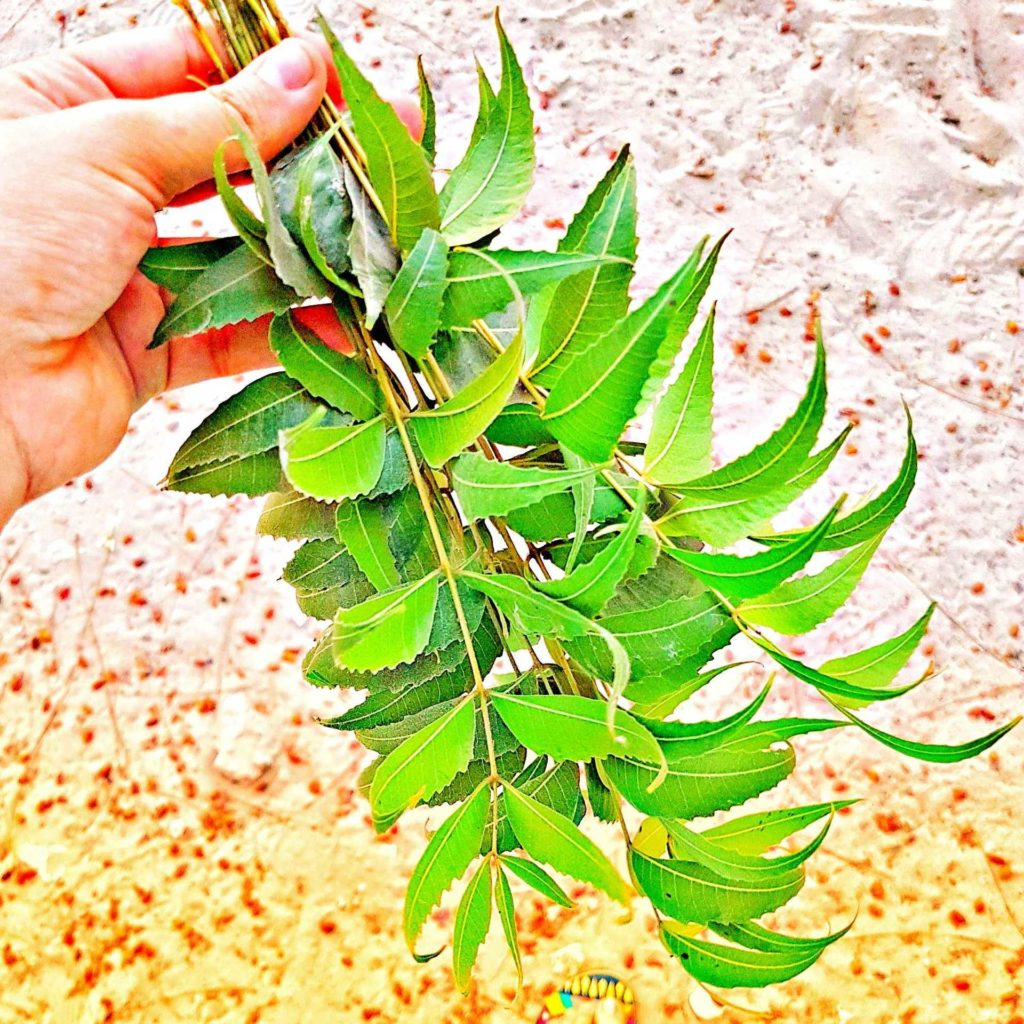 How to use Neem for Skin and Hair